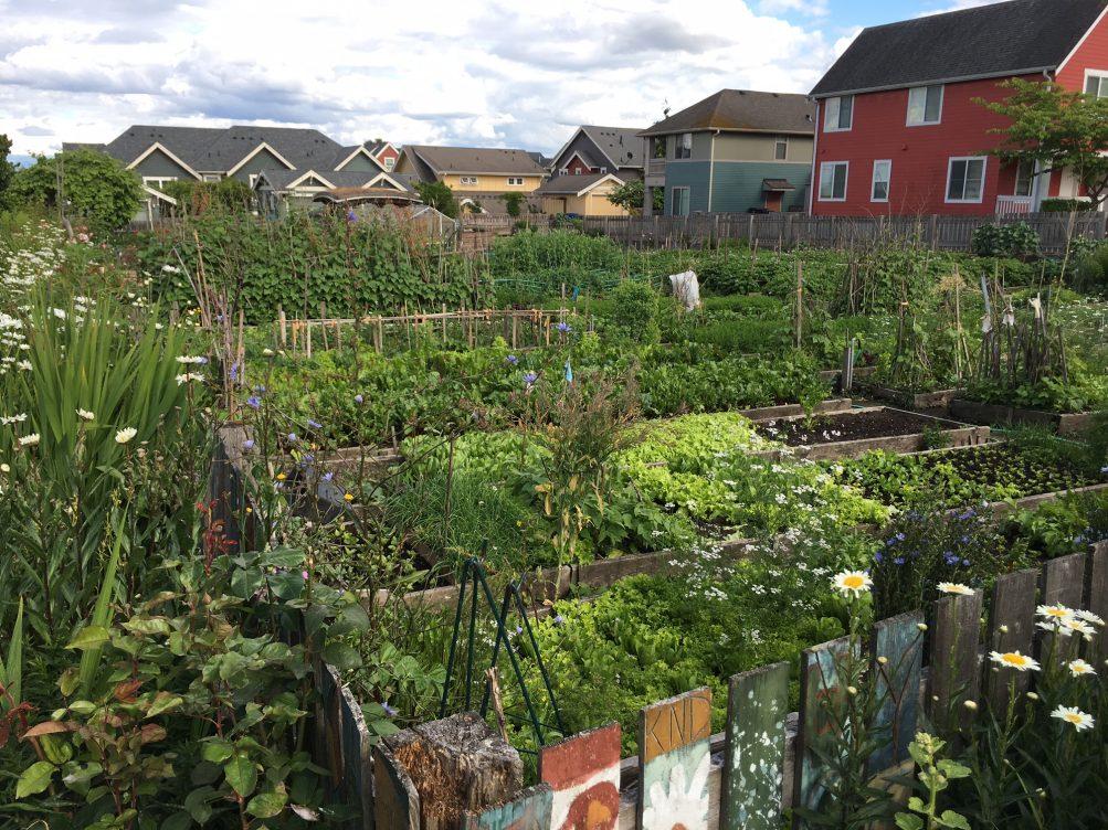 West Seattle Blog… | West Seattle\'s High Point Market Garden farm ...